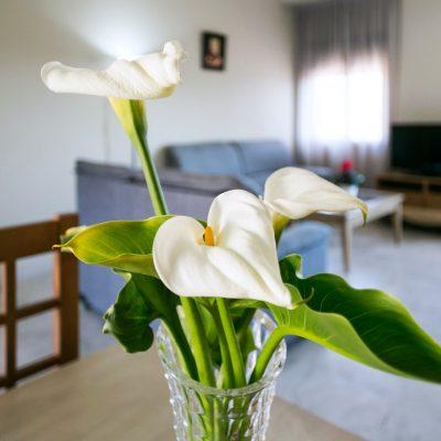 apartamentos_turisticos_la_castilleja_3171